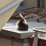 コロナどこ吹く風・陽なたの猫