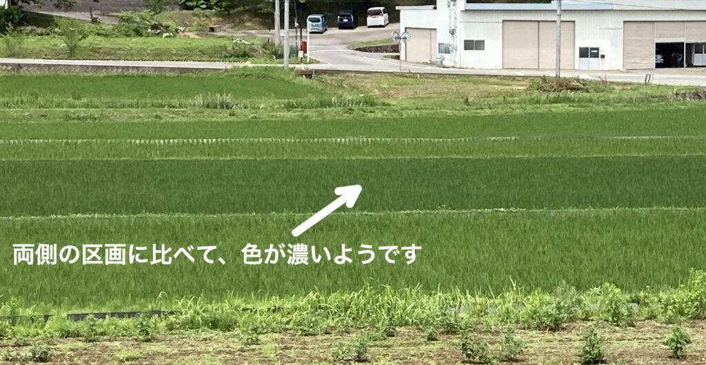 sakuho2021